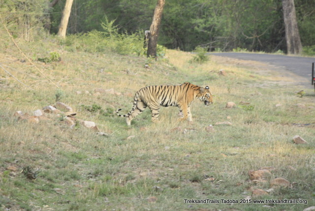 Treks-and-Trails-Tadoba