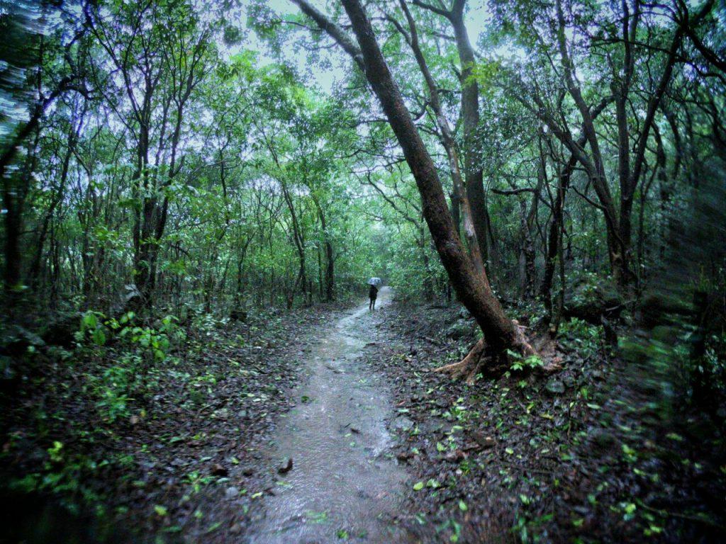 Bhimashankar-Bhorgiri-Jungle-Trail