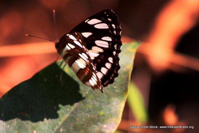 Discover Nagla Block Forest