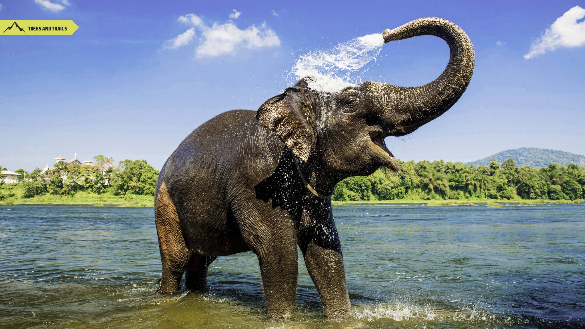 Periyar National Park Elephant