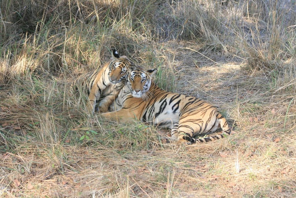 Bandhavgarh-Tiger-National-park