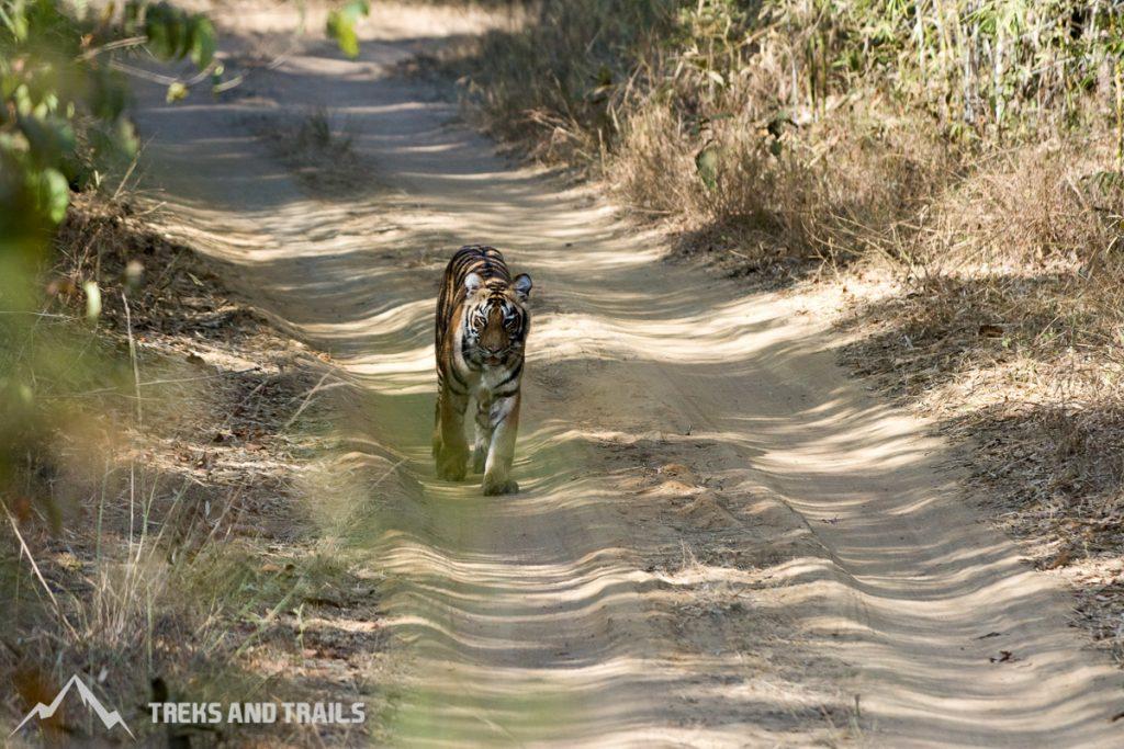 Tadoba Andhari Tiger Reserve-5