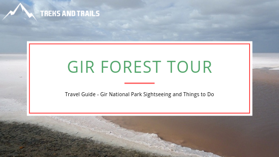 An All-Inclusive Guide To The Gir Forest Tour