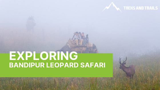 Find Out Everything About Bandipur Leopard Safari Here