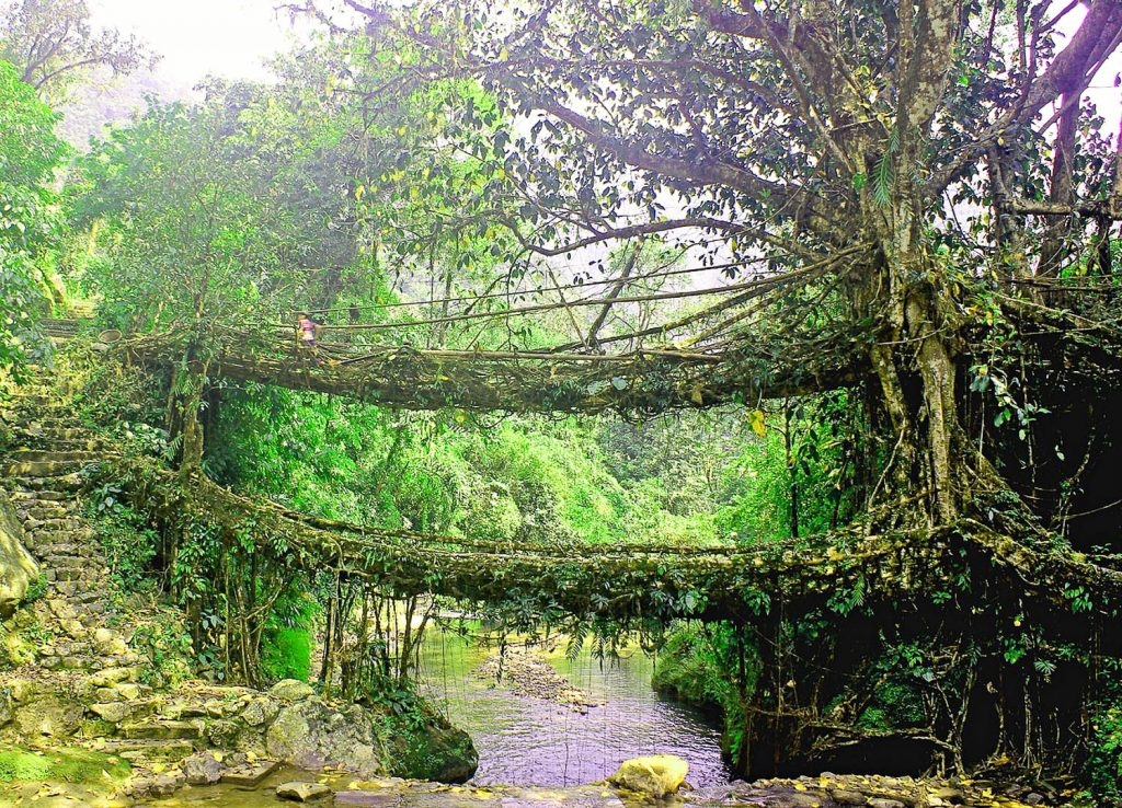 Living-Root-Bridge