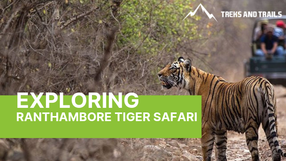 See The Big Cats In The Wild At Ranthambore Tiger Safari
