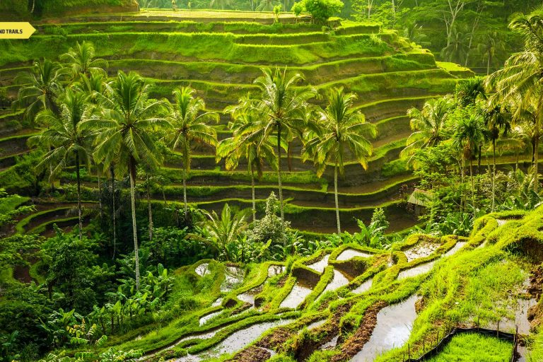 Bali Indonesia Tourism | Digital Nomads