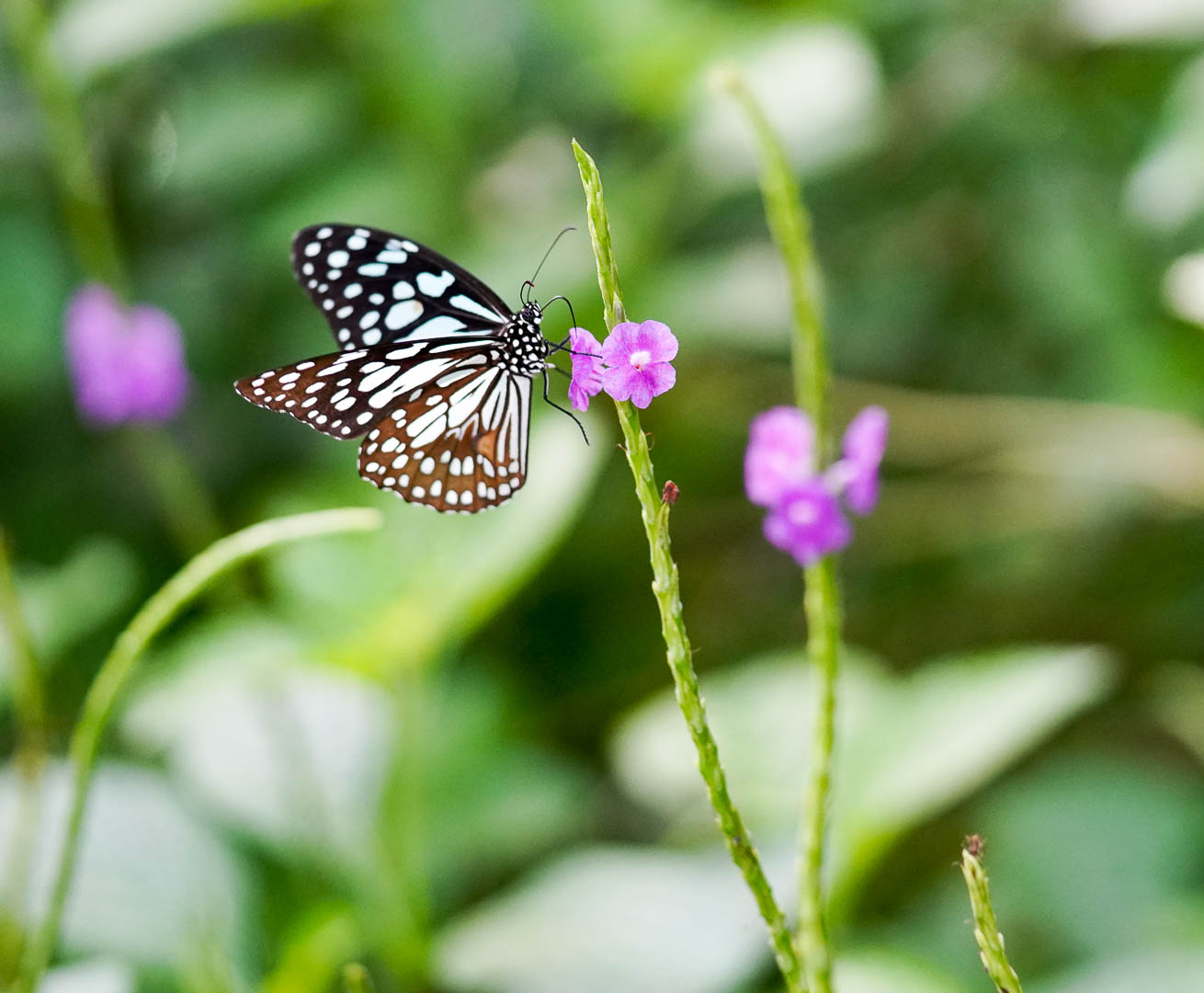 Ovalekar-Wadi-Butterfly-Park