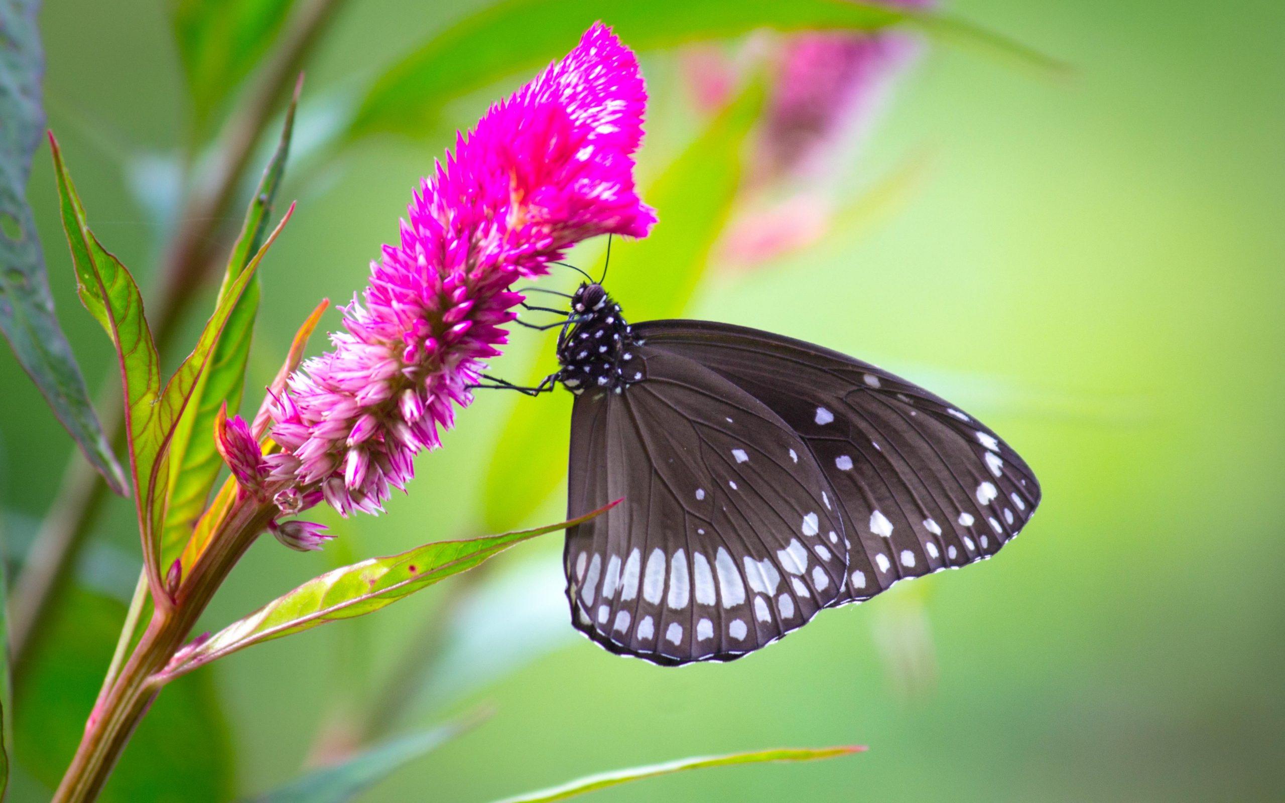 Butterfly-Park